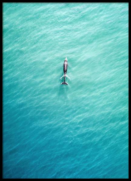 Dolphin From Above Affiche dans le groupe Affiches / Nature chez Desenio AB (10230)