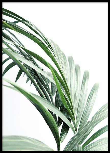 Palm Tree Leaves Close Up Affiche dans le groupe Affiches / Photographie chez Desenio AB (10244)