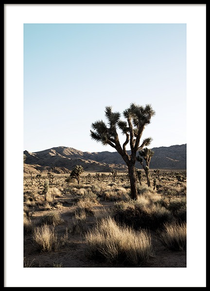 Joshua Tree National Park Affiche dans le groupe Collections Studio / Studio Coast to Coast / Palm Springs chez Desenio AB (10798)