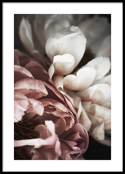 Pink and White Peony Affiche dans le groupe Affiches / Photographie chez Desenio AB (10989)