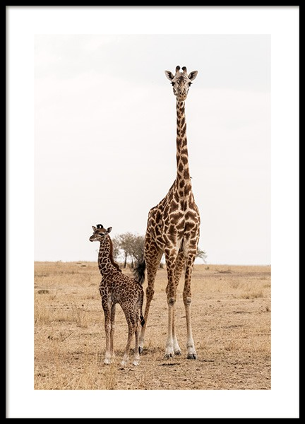 Mother and Baby Giraffe Affiche dans le groupe Affiches / Insectes et animaux chez Desenio AB (12578)