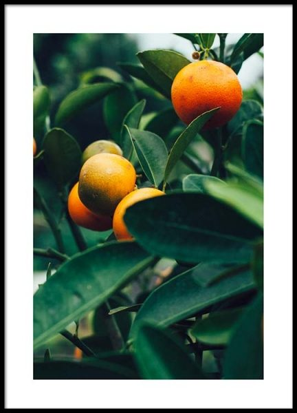 Orange Tree Two Affiche dans le groupe Affiches / Photographie chez Desenio AB (2470)