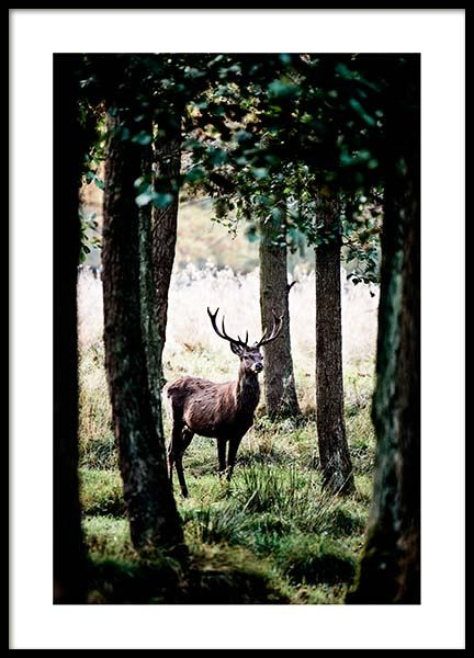 Stag In Forest Affiche dans le groupe Affiches / Nature chez Desenio AB (2743)
