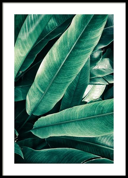 Banana Leaves Close Up Affiche dans le groupe Affiches / Photographie chez Desenio AB (3549)