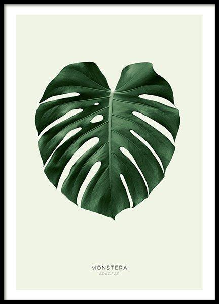 affiches et posters botaniques affiche avec feuille de philodendron verte. Black Bedroom Furniture Sets. Home Design Ideas