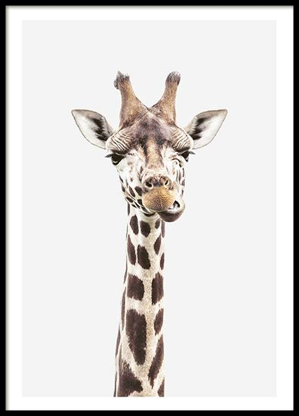 Baby Giraffe, Affiche dans le groupe Affiches / Insectes et animaux / Animaux sauvages / Girafes chez Desenio AB (8358)