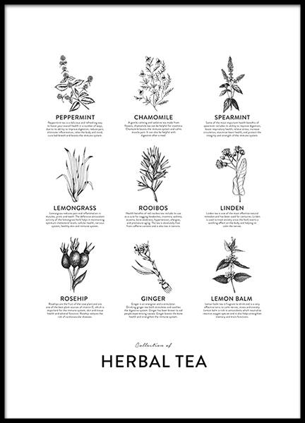 Collection Of Herbal Tea, Affiches dans le groupe Affiches / Affiches cuisine chez Desenio AB (8594)