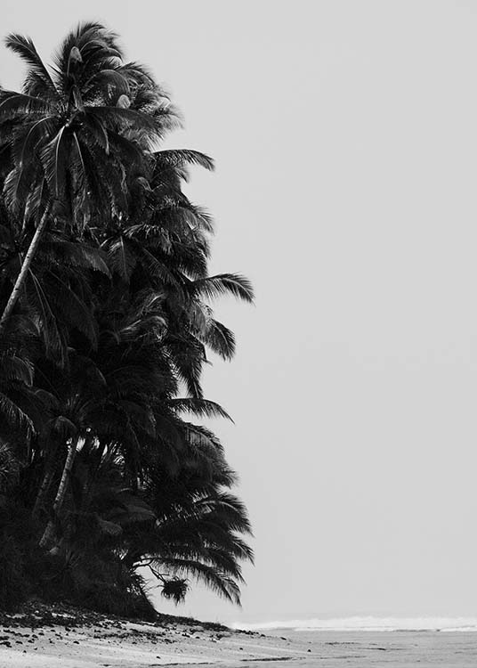 Palm Trees By Sea Affiche / Noir et blanc chez Desenio AB (10235)