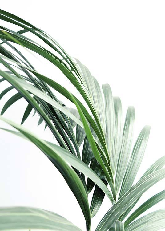 Palm Tree Leaves Close Up Affiche / Photographie chez Desenio AB (10244)