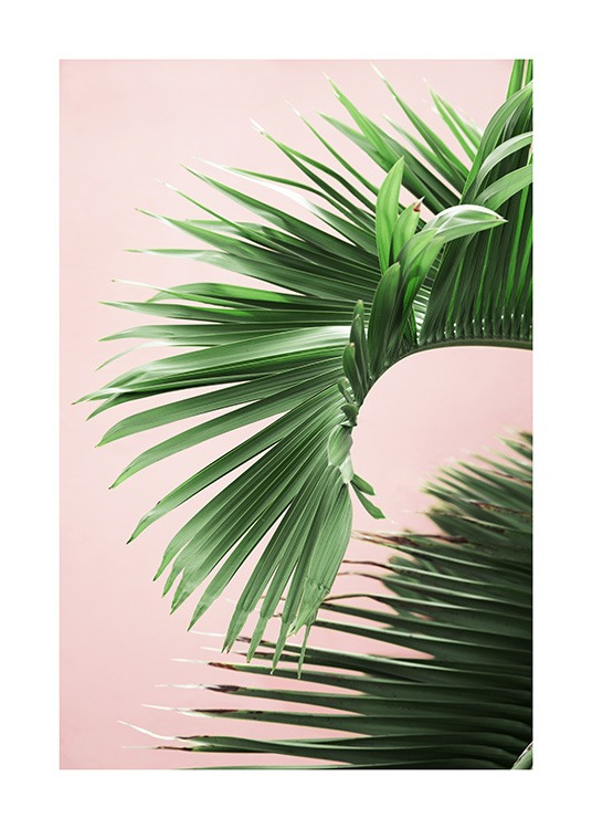 Pink and Green Palm No2 Affiche / Photographie chez Desenio AB (10856)