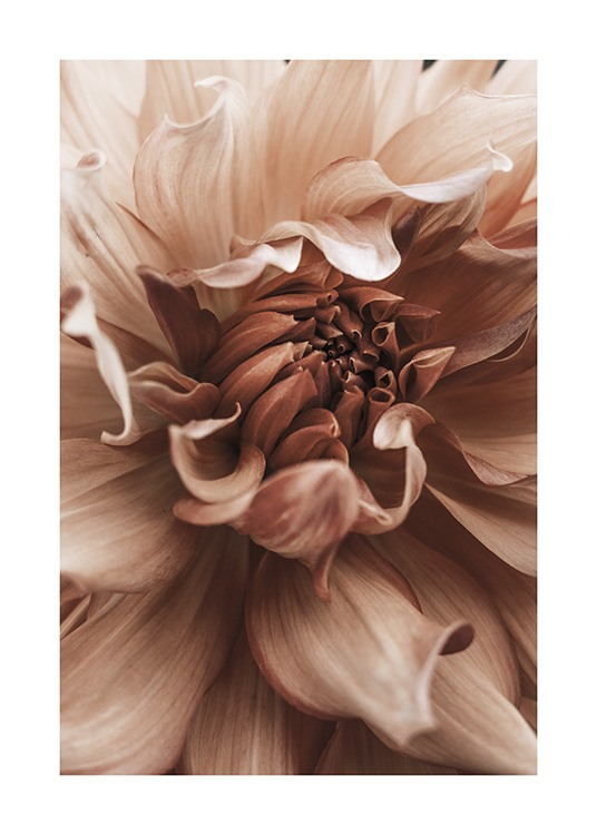 Earth Flower Affiche / Photographie chez Desenio AB (10998)
