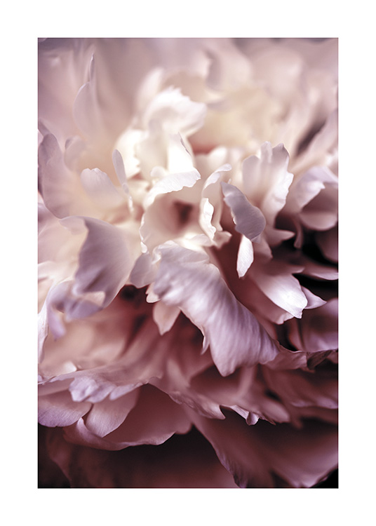 Peony Close Up Affiche / Photographie chez Desenio AB (11186)