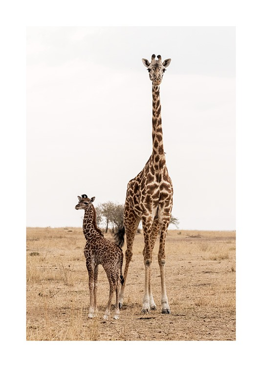 Mother and Baby Giraffe Affiche / Photographie chez Desenio AB (12578)