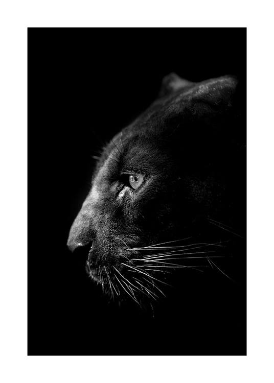 Panther B&W Affiche / Animaux sauvages chez Desenio AB (13867)
