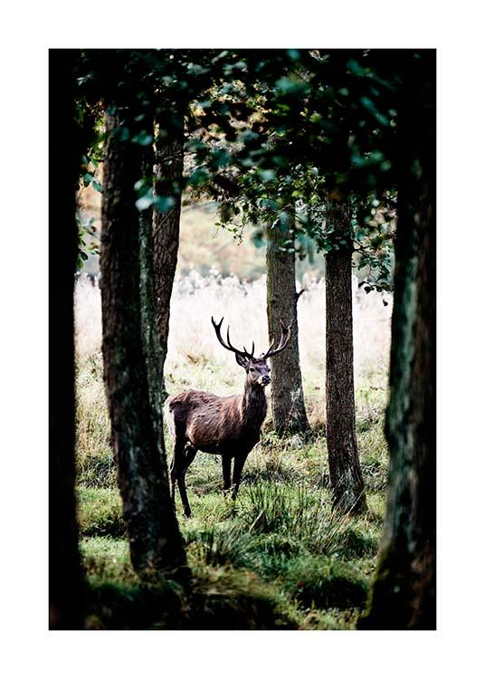 Stag In Forest Affiche / Nature chez Desenio AB (2743)