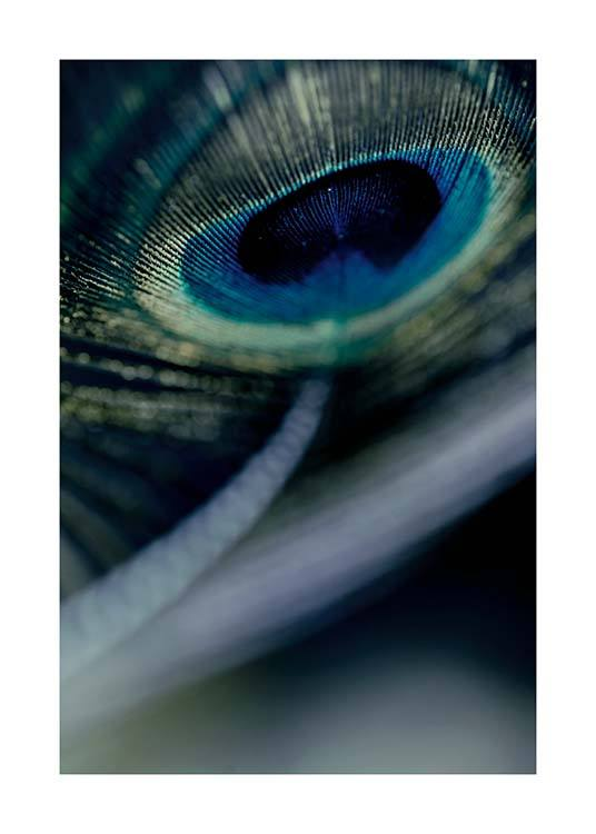Peacock Feather Close Up Affiche / Photographie chez Desenio AB (2860)