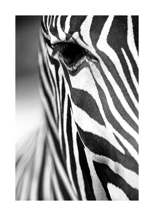 Zebra Close Up Affiche / Noir et blanc chez Desenio AB (3855)