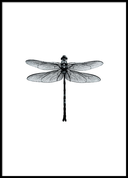 dragonflies affiche noir et blanc avec libellules. Black Bedroom Furniture Sets. Home Design Ideas
