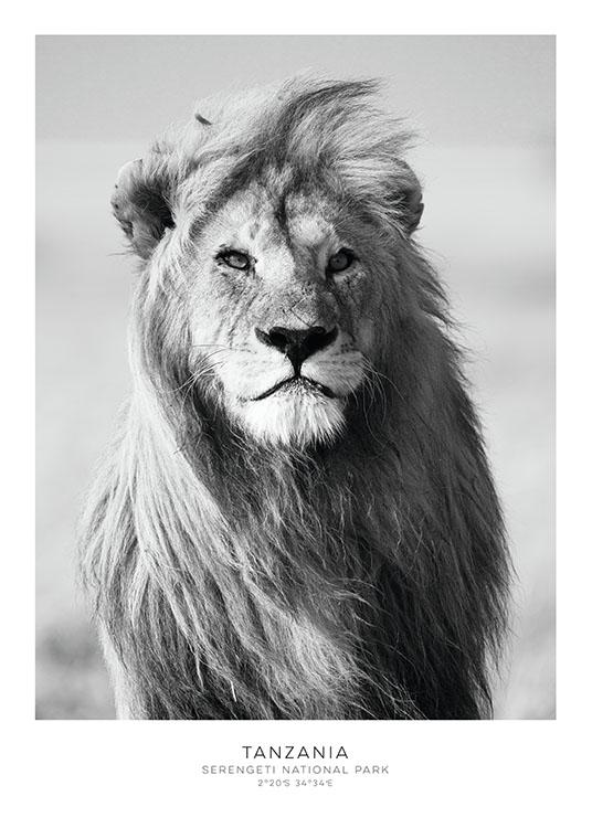 beau poster avec un lion affiches noir et blanc pour. Black Bedroom Furniture Sets. Home Design Ideas