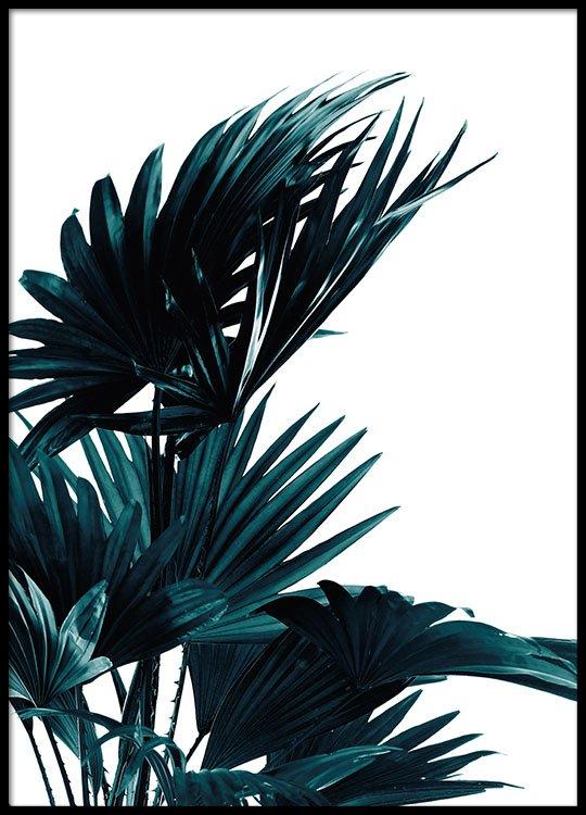 affiche avec feuille de palmier photos botaniques desenio. Black Bedroom Furniture Sets. Home Design Ideas