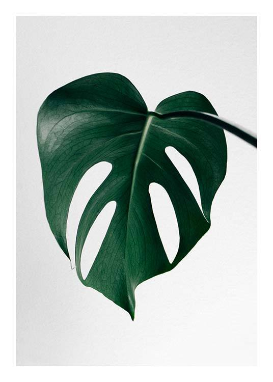 Monstera One Affiche